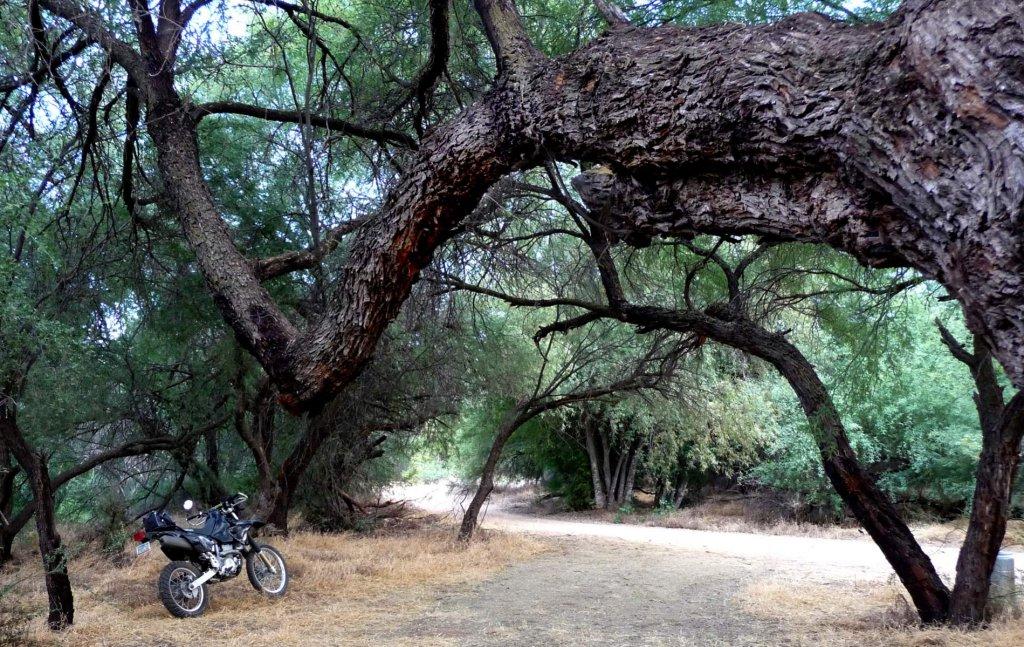 drz_tree.jpg