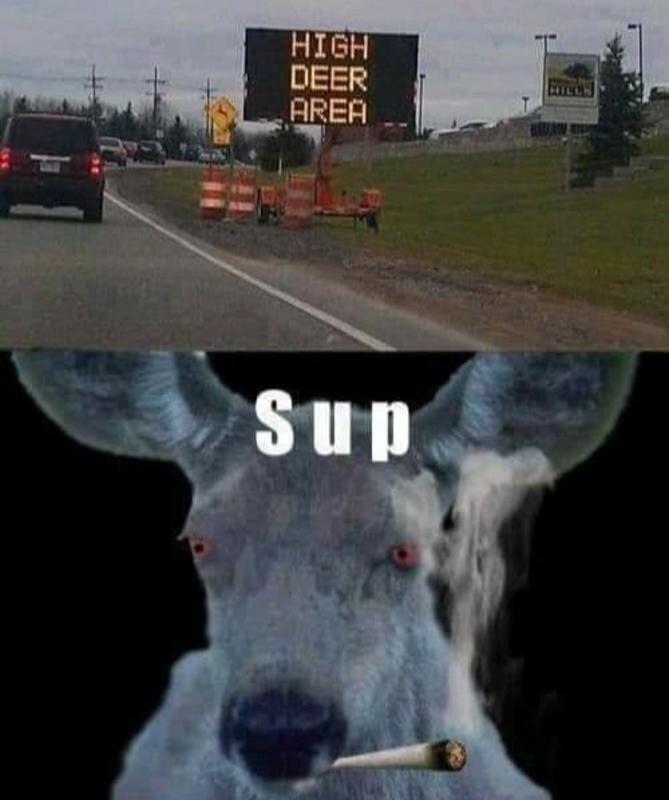 High Deer Area.jpg